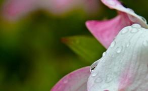 water-flowers