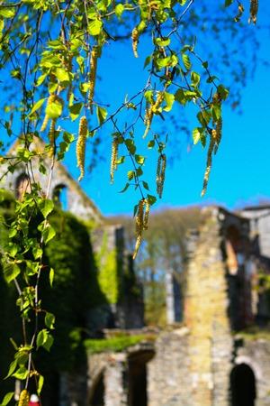 birch-ruins