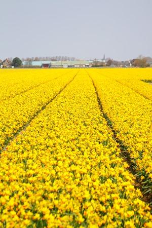 fields6