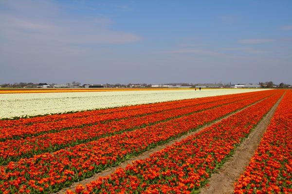 fields8