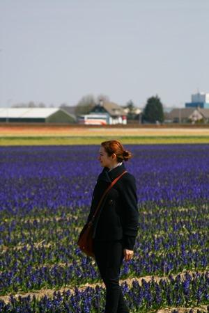 hyacinth-field