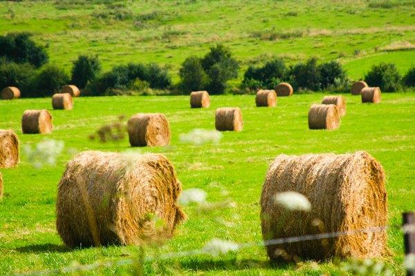hay-stacks