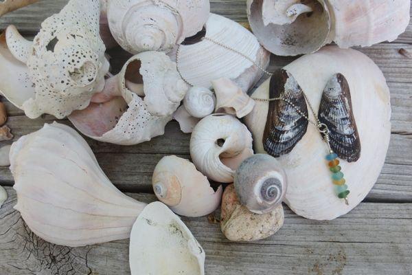 patricia-sea-shells
