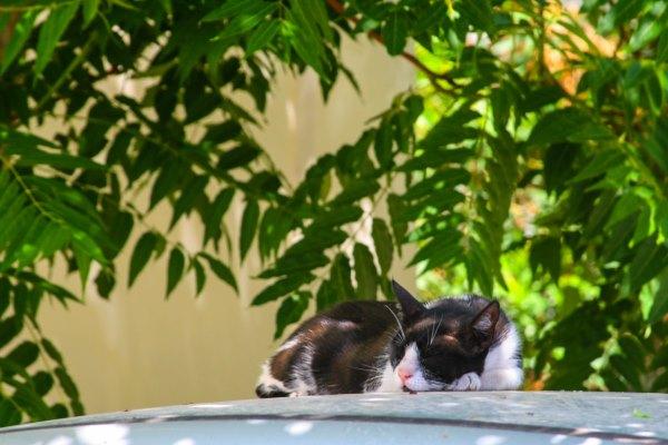cat-sun