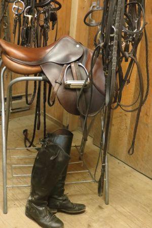 horses2a