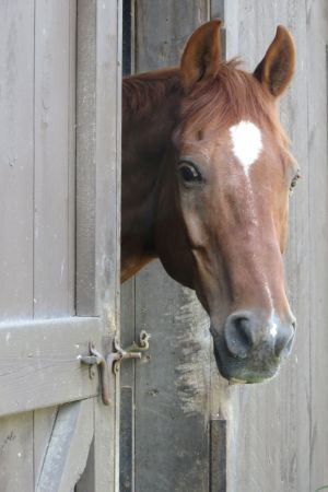 horses2b