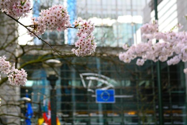 spring-blossoms-brussels