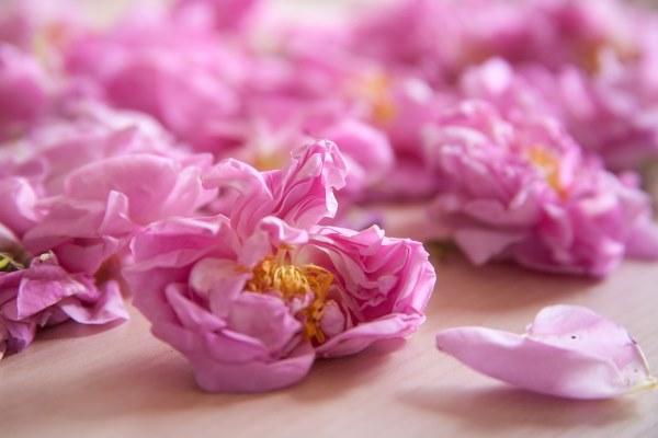 roses11