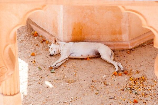 sleeping in marigolds