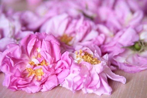 roses-grasse17