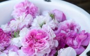 rose-jam1