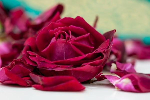 rose-india