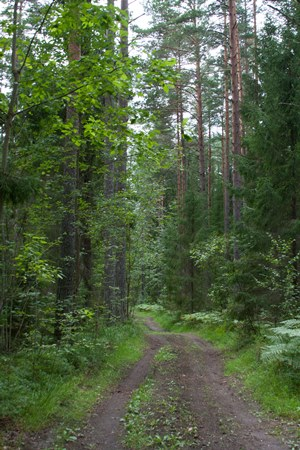estonia-forest