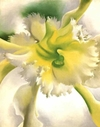 Yellow_orchid_okeefe